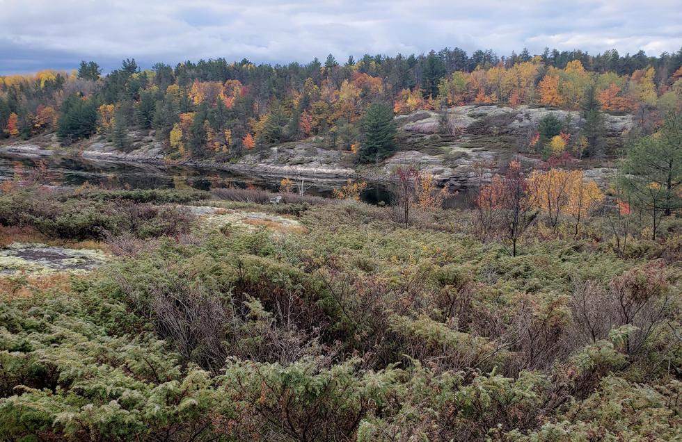 Eastwood Site 2.jpg