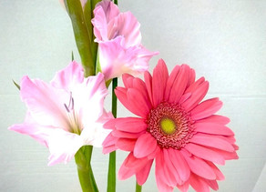 The Benefits of Flowers in Mankind