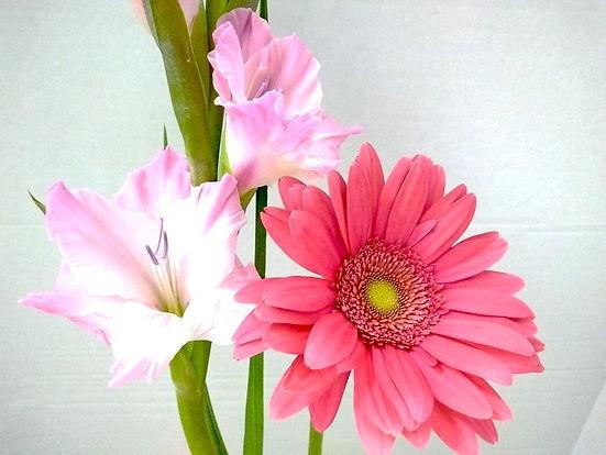 Estrella's Flower Shop Pasion._edited_ed