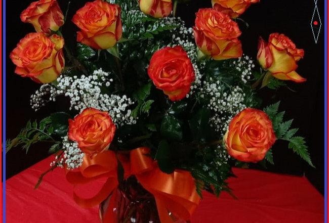 12 Long Stem High Magic Roses