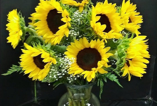 12 Sunflowers. Beautiful sunflowers in a Vase.