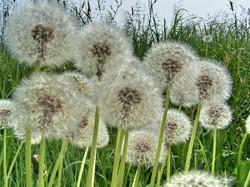 weed-1372529.jpg