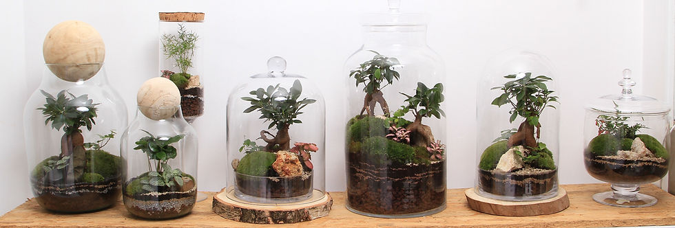 terrariums La Fabrique de Lord Applegreen