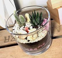 kit terrarium succulentes