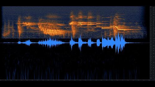 Bird Whistling, Robin, Single, 01-08
