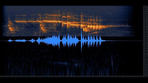 Bird Whistling, Robin, Single, 01-07