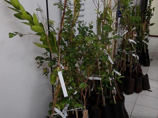 Parceria incentiva o cultivo de árvores frutíferas no município