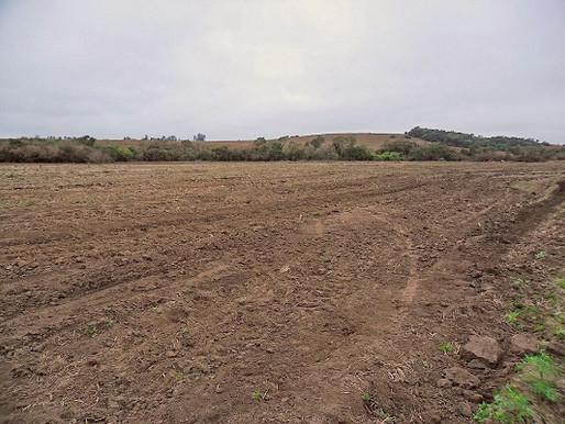 Produtores rurais da região preveem ampliação de área orizícola