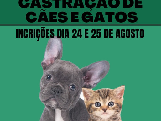 Campanha realiza castração de cães e gatos para pessoas de baixa renda