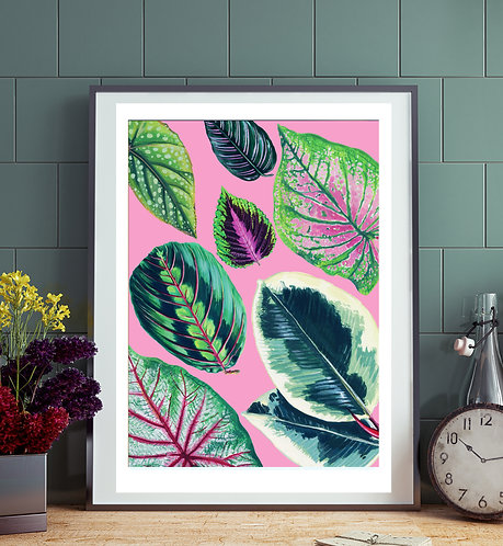 Mixed Pink Houseplant Print