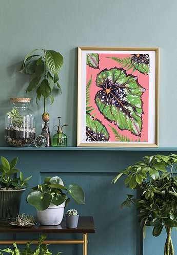 PACK of 2 Begonia Houseplant Print