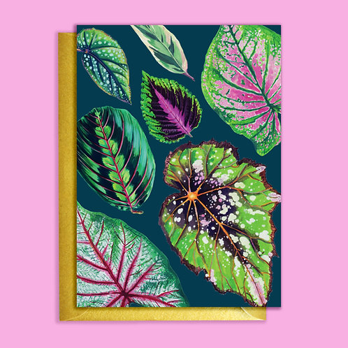 PACK of 6 Vivid Mixed Houseplants Teal Pattern Card