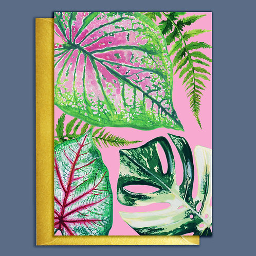 PACK of 6 Pretty Mixed Houseplants Card