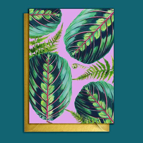 PACK of 6 Prayer Plant  Houseplants Teal Pattern Card