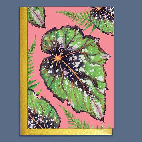 PACK of 6 Begonia Houseplants Card