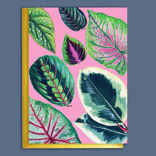 PACK of 6 Bright Mixed Pink Pattern  Houseplants Card