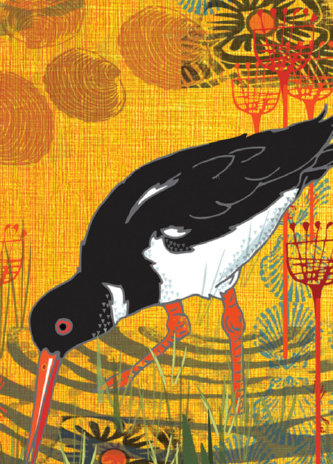 Oyster Catcher Greetings Card