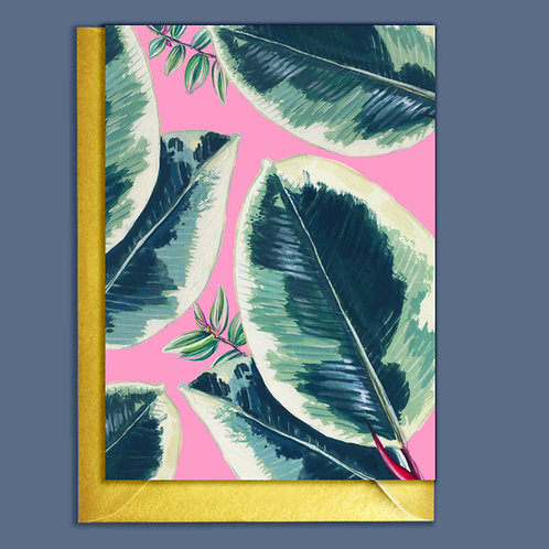 PACK of 6 Rubber Plant  Houseplants Card