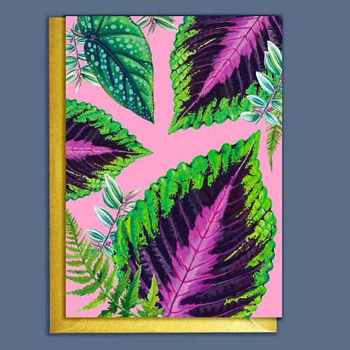 Pink Coleus Pattern Houseplants Card