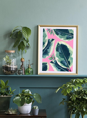 PACK of 2 Houseplant Rubber Plant Print