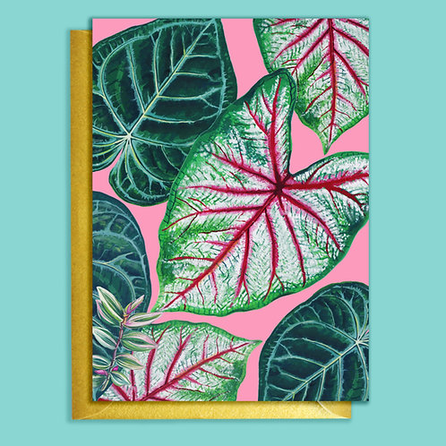 Pink Caladium & Anthurium Houseplants Card