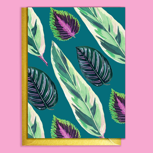 PACK of 6 Teal Mixed Houseplants Card