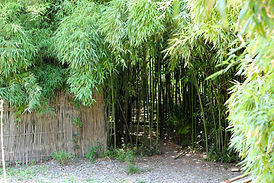31.бамбуковая роща.jpg