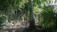 Бамбук Хутор Ecoestate
