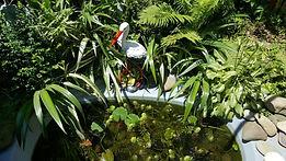 Бамбук Хутор reuse Пруд из ванны
