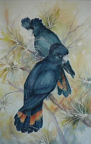 2 Red tailed cockatoo's in Watercolour