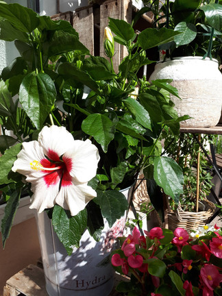 plantes-min.jpg