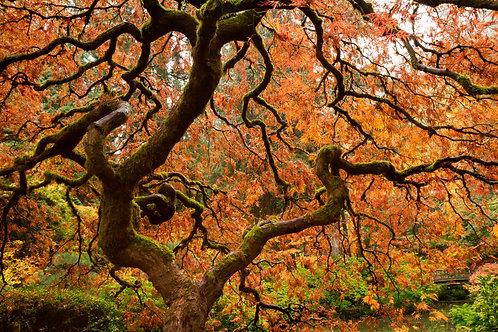 Order #ST006 Japanese  Gardens in Portland, Oregon