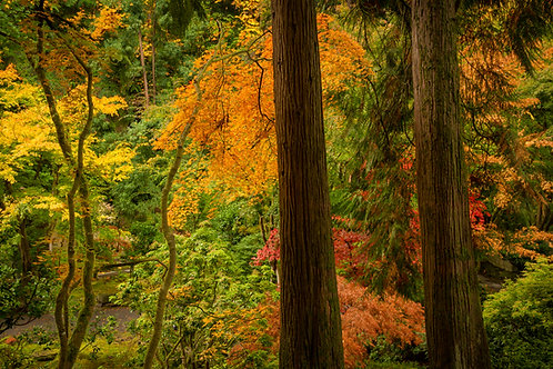 Order #ST004 Japanese  Gardens in Portland, Oregon