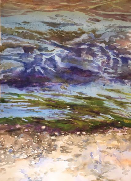 Low Tide Algea