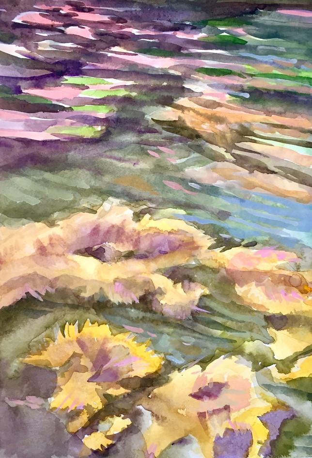 Seaweed Rising