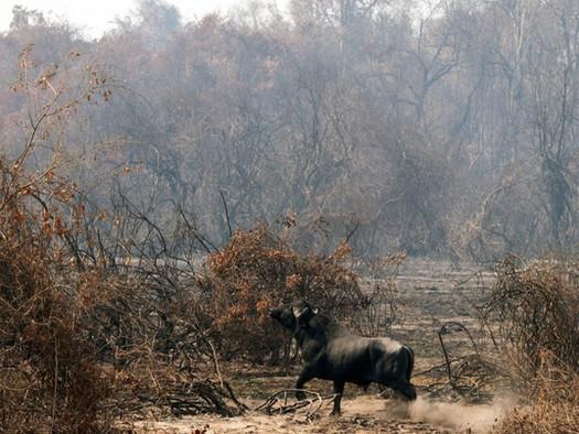 Imagens das queimadas no Pantanal: A natureza pede socorro
