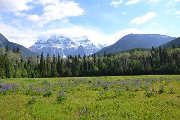 canada landscape.jpg