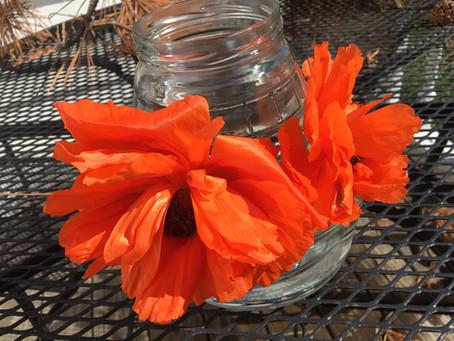 Poppy Flower Essence
