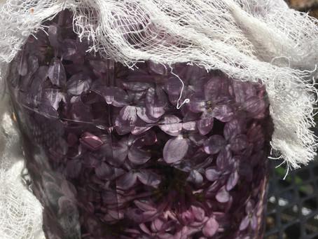 Lilac Remedy