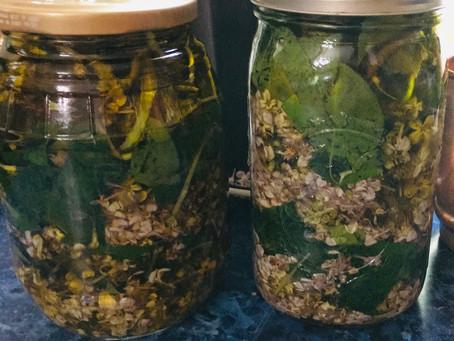 Lilacs in Olive oil
