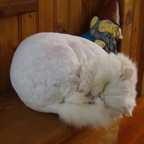 Sleep like a Cat * Organic and all natural Kit * Magical