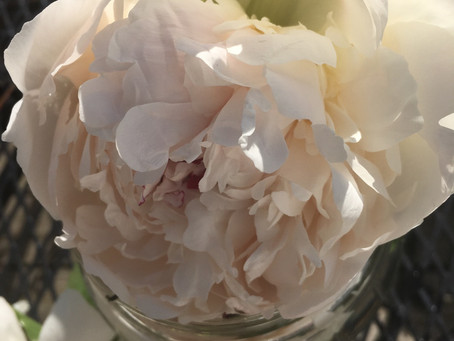 Peony Flower Essence * Allow yourself to be happy