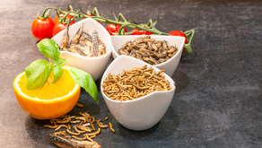 Cocina Ento, el Arte de Cocinar Insectos