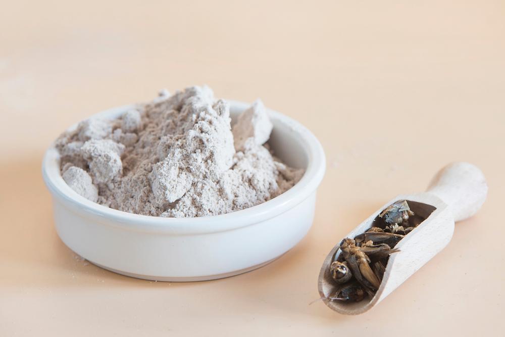 Harina o polvo de grillos, con más de 60% de proteínas