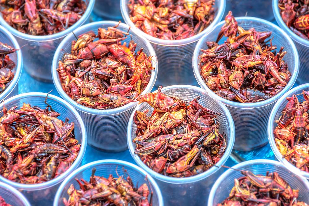 Chapulines colorados fritos. Plato tradicional de la gastronomía con insectos de México