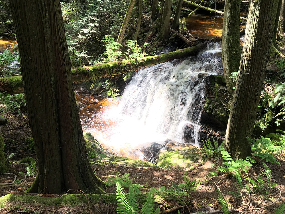 Yoga Classes in Gibsons, BC - Integrative Healing with Sadhana