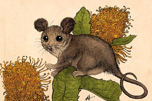 """Pygmy Possum"" giclee graphic"