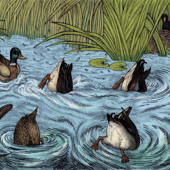 Chapter 2 Ducks Dabling