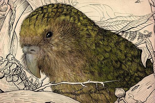 """""""Kakapo"""" giclee graphic"""