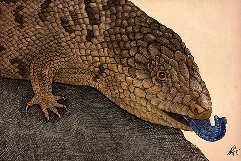 """Blue-Tongued Skink"" giclee graphic"